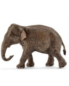 Elefante Fêmea Asiático
