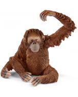 Orangotango Fêmea