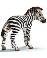 Zebra Cria