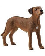 Cão de Crista da Rodésia